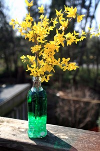 Olive Oil Vases